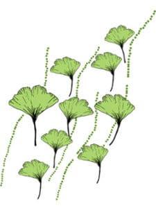 gimko foglie